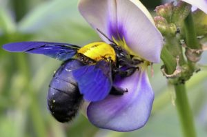 Bees eat constantly