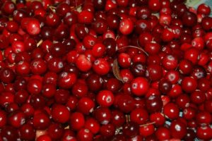 cranberry juice is good for a UTI if it has no sugar added. Sugar will feed bacteria.