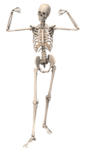 Glucosamine will help you maintain healthy cartilage and bones. I now know how important it is to protect our bones when we're younger. Did you know this?