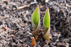 You can recycle where they make mulch so new life can grow when it is used.