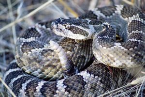 Dry skin in winter? Do you wish you could shed your skin like a snake?